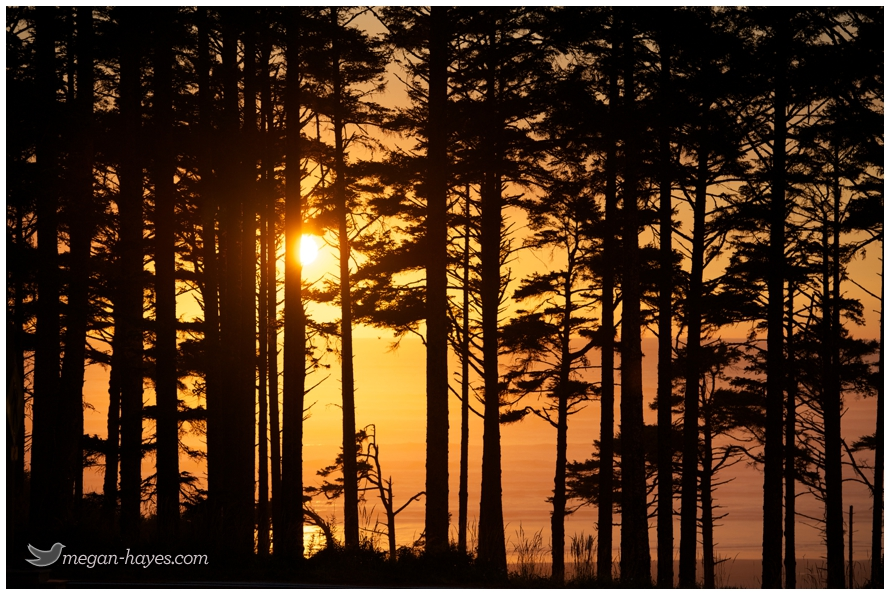 seabrook washington beach sunset